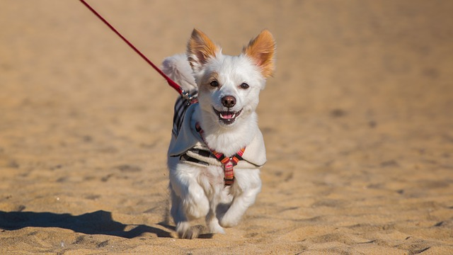 Great Emergency Preparedness Tips for Pets