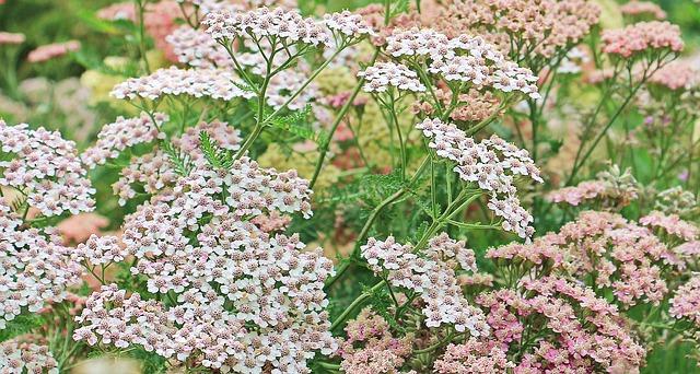 herbs for your prepper garden