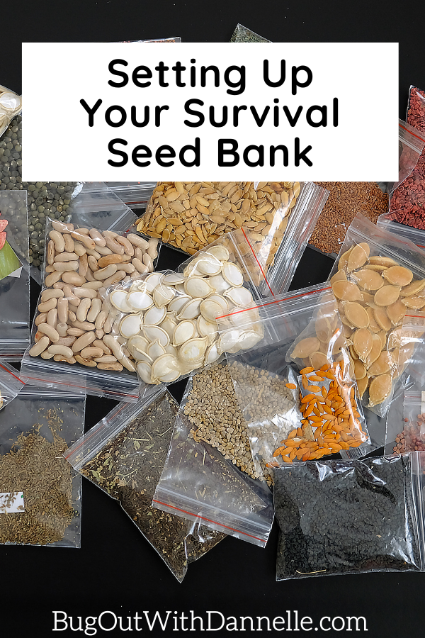 Setting Up Your Survival Seed Bank article cover image with seeds