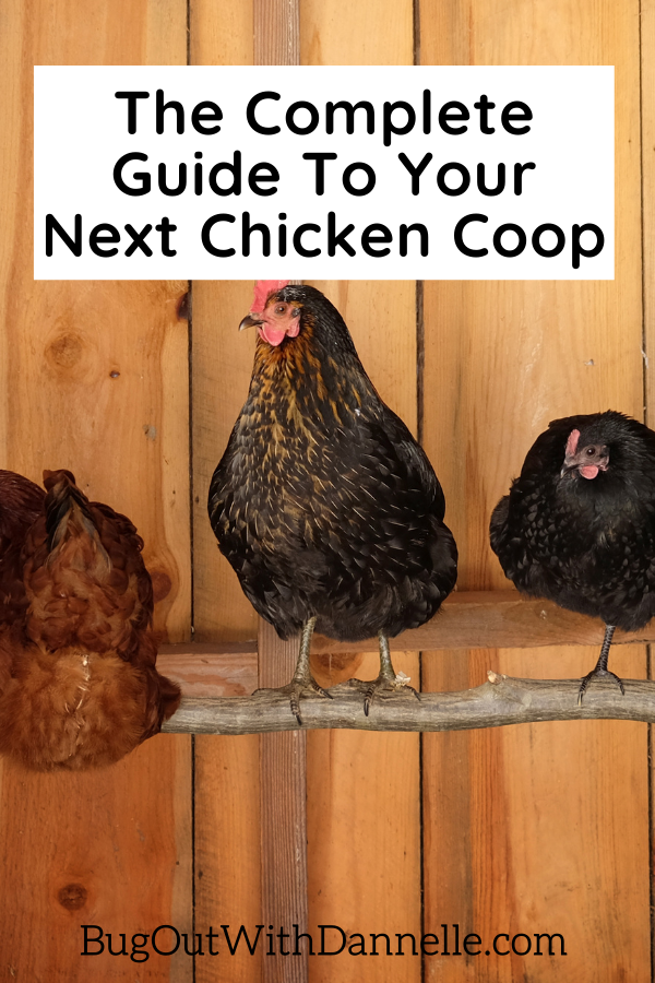 The Complete Guide To Your Next Chicken Coop article featured image with chickens roosting