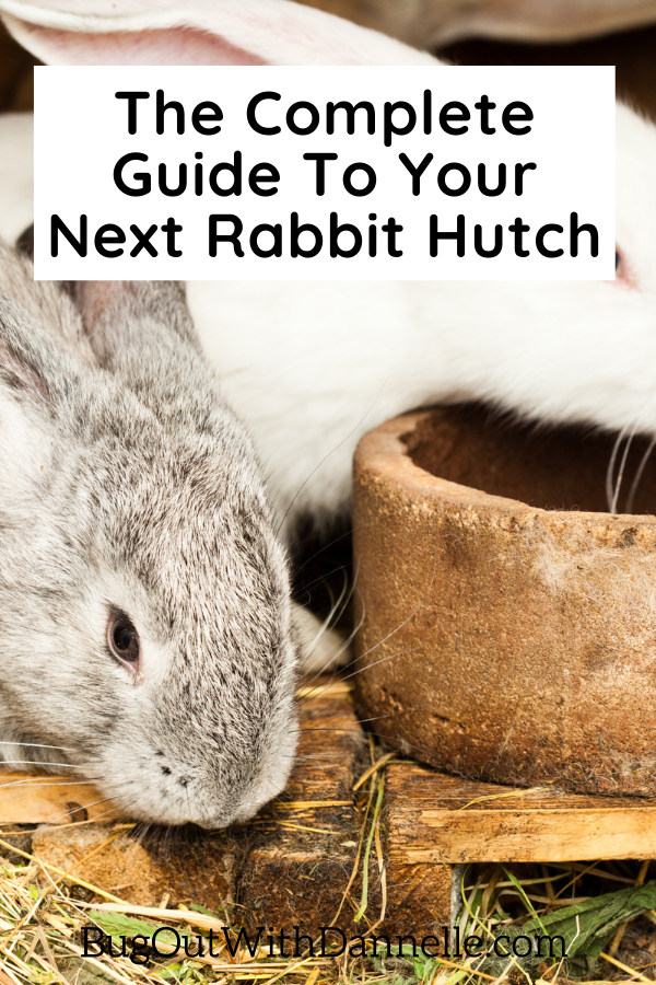 The Complete Guide To Your Next Rabbit Hutch article cover image with a bunny