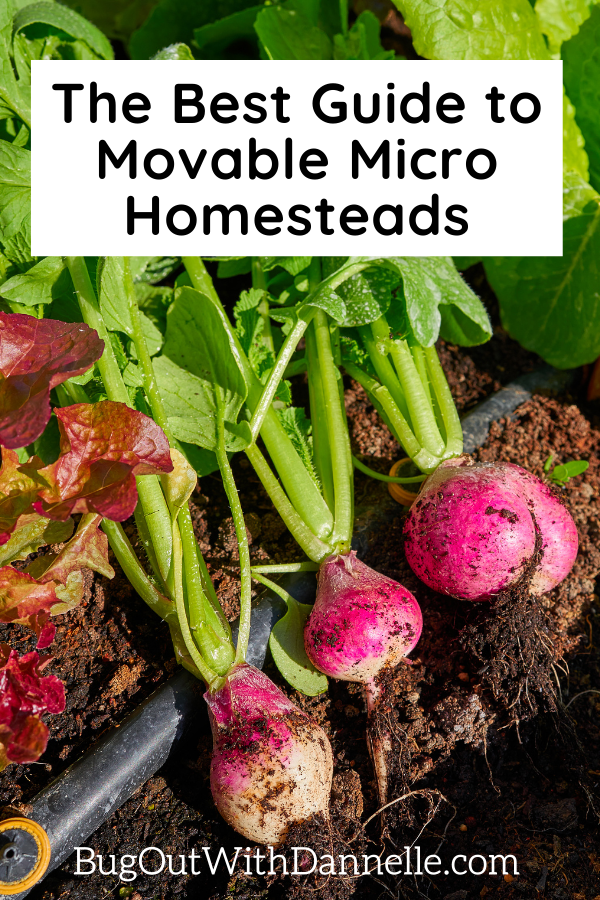 The Best Guide to Movable Micro Homesteads in article image