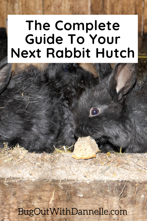 What Kind of Rabbit Hutch Plans Do You Need for Your Pet?