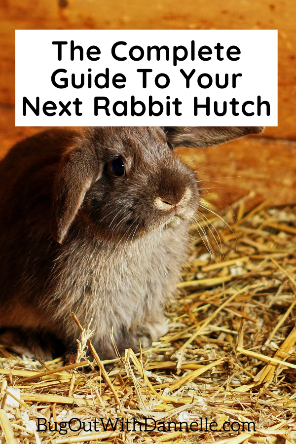 How to Buy the Right Pet Rabbit Hutch