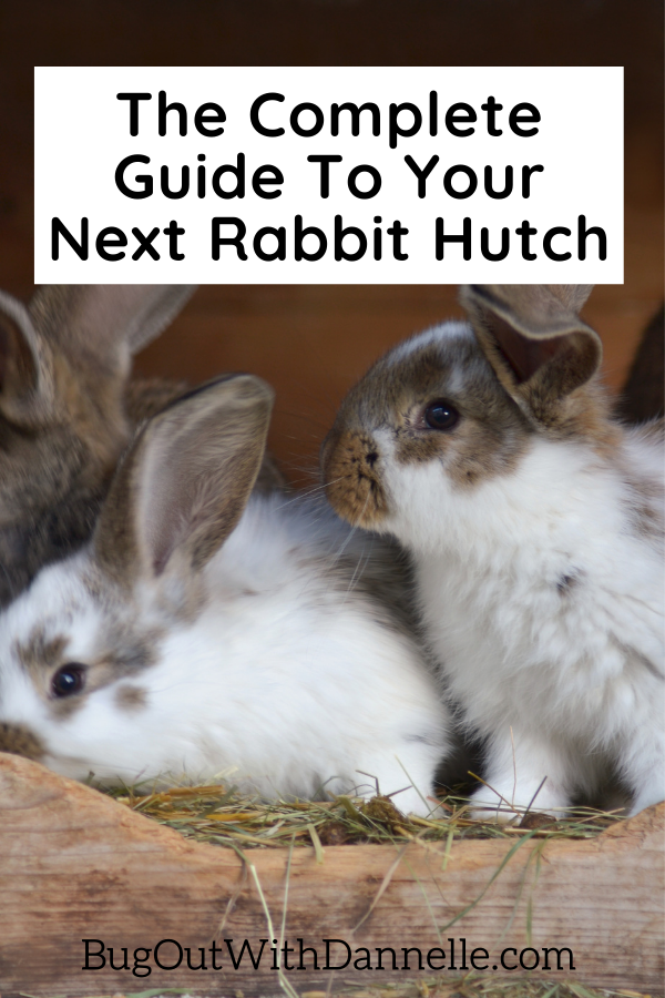The Complete Guide To Your Next Rabbit Hutch