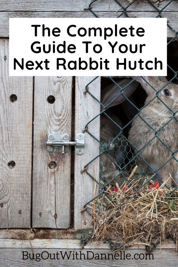 The Complete Guide To Your Next Rabbit Hutch bunny in a hutch