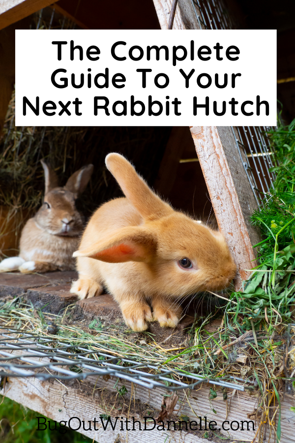 Give Your Pet More Space With a Rabbit Hutch Run