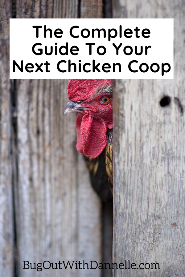 The Complete Guide To Your Next Chicken Coop with roster sticking head through the wall