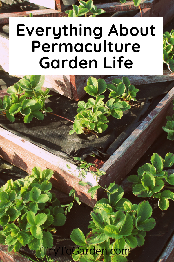 Everything About Permaculture Garden Life