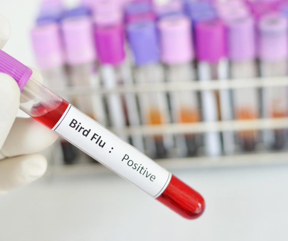 How Do Birds Get Bird Flu?
