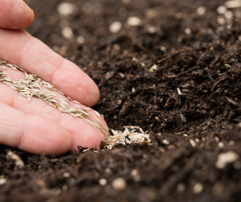 The Top Five Easy to Grow Vegetable Seeds